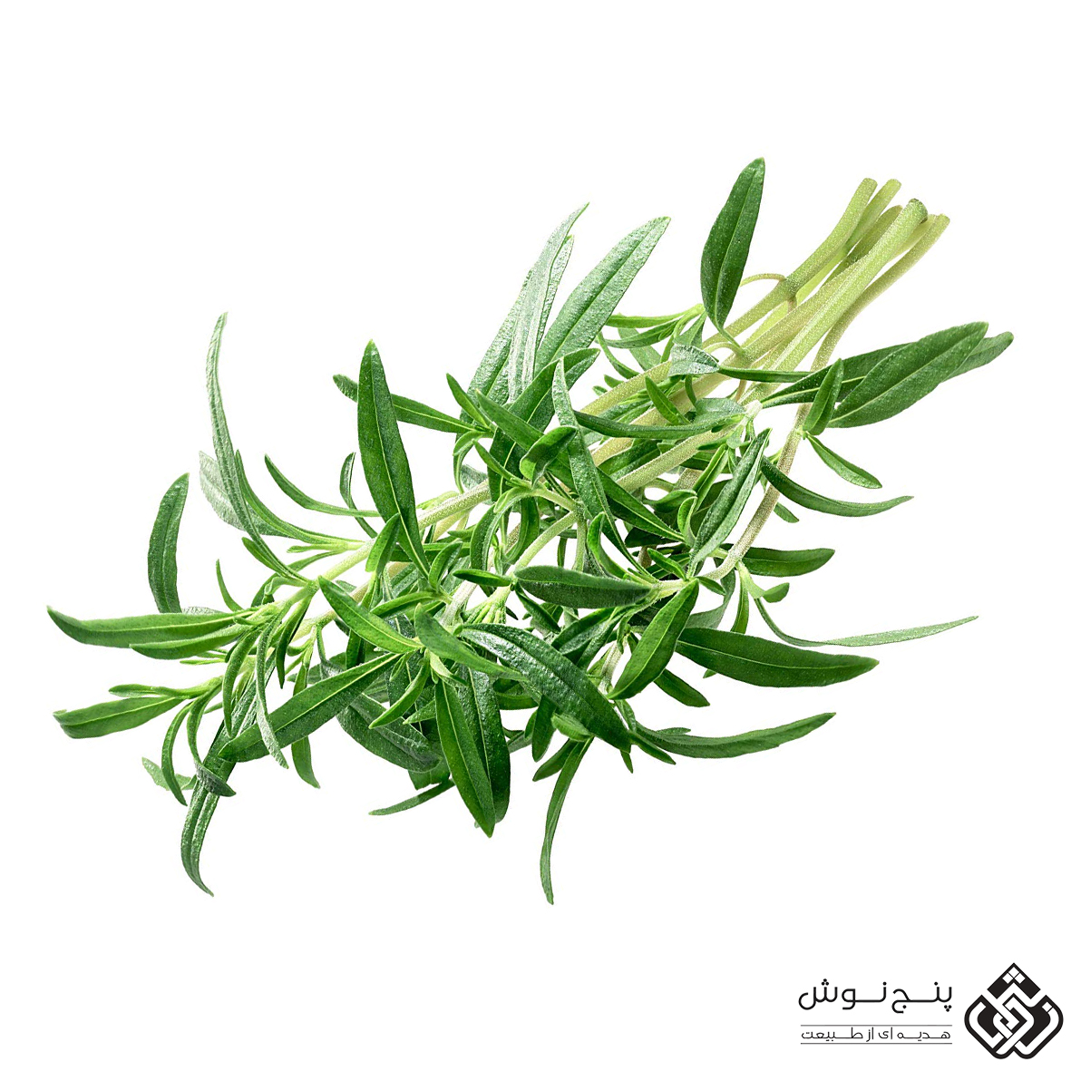 گیاه مفید مرزه خوزستانی و خواص آن
