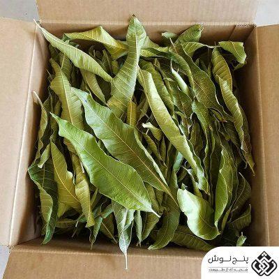 برگ انبه خشک (درمان سنگ کیسه صفرا) 50گرمی