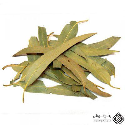 برگ اکالیپتوس (ضد میکروب و مشکلات تنفسی ) 50گرمی